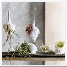 Shells & airplants, napkin detail, wedding favor