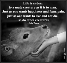 Life is as dear to a mute creature as it is to man. Just as one wants happiness and fears pain, just as one wants to live and not die, so do other creatures -Dalai Lama Lama Animal, Animals And Pets, Cute Animals, Strange Animals, Nature Animals, Baby Animals, Vegan Quotes, Vegetarian Quotes, Vegan Memes