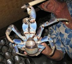 Ha-ha. Yeah, you sneaky fokken prawns, heh? I knew you prawns were intelligent. - Van De Merwe (District 9)