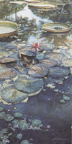 Artifacts Gallery - Water Lilies in Bloom.  Watercolour by Steve Hanks. Steve Hanks is recognized as one of the best watercolor artists working today. The detail, color and realism of Steve Hanks' paintings are unheard of in this difficult medium. A softly worn patterned quilt, the play of light on the thin veil of surf on sand, or the delicate expression of a child—-Steve Hanks captures these patterns of life better than anyone.