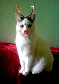 HIGHLY COMMENDED: Best Photoshopped Furball. Angel from Kevin Cadwallender