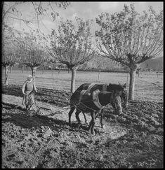 https://flic.kr/p/GbD7XK | Γυναίκα που οργώνει, 1950 - 1960. Βούλα Παπαϊωάννου, Φωτογραφικό Αρχείο Μουσείου Μπενάκη.