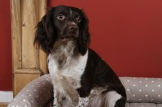 Kip Dog Bed Lounger with Bolster in Dotty Taupe fabric