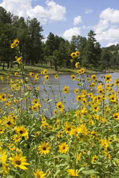 Kaibab Lake Campground in Williams Arizona offers up great recreational opportunities.