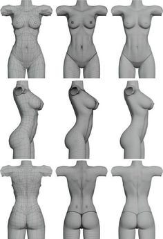 3d Anatomy, Anatomy Models, Anatomy Drawing, Human Anatomy, Body Reference, Anatomy Reference, Female Reference, Photo Reference, Female Torso