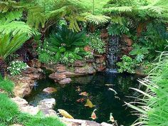 If you have a backyard, you could easily turn it into a gorgeous garden with fountains, pools, and flowers. A water garden can turn your backyard into a relaxing haven that everyone can enjoy. The water from the fountain or… Continue Reading → Water Pond, Water Garden, Wet Water, Outdoor Water Features, Water Features In The Garden, Backyard Water Feature, Ponds Backyard, Pond Landscaping, Landscaping With Rocks