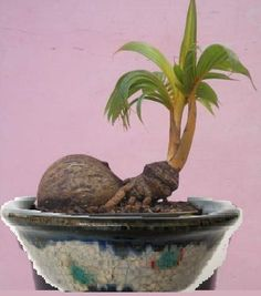 unusual bonsai - Google Search