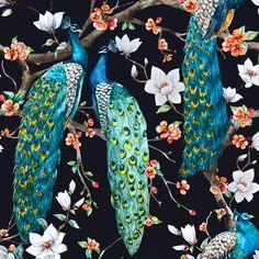 Victorian Peacock – Black by Zenina Anastasia. Art We Love.