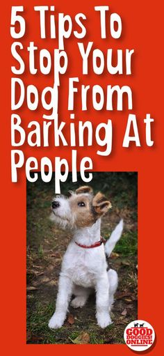 Pet Training - If your dog barks at everyone, check out these 5 easy dog training tips on how to get your dog to stop barking at people. via Kaufmann's Puppy Training This article help us to teach our dogs to bite just exactly Stop Puppy From Biting, Puppy Biting, Puppy Paw, Husky Dog, Basic Dog Training, Puppy Training Tips, Potty Training, Training Dogs, Training Schedule
