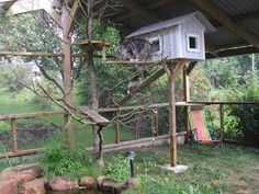 catrun in sweden, pictures Outside Cat Enclosure, Diy Cat Enclosure, Cat Fence, Feral Cats, Feral Cat Shelter, Cat House Diy, Cat Run, Cat Condo, Outdoor Cats