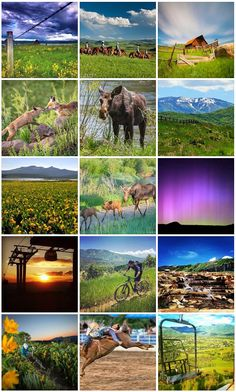 Steamboat Resort fan photos from June 2015. Steamboat Springs, Colorado