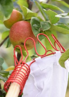 Quicker fruit picker - This fruit picker will speed up the picking of your apples, plums and pears. By attaching the picker to a 2.5cm broom or telescopic handle; high up, or out of the way fruit can be reached without the need of a ladder.  The picker is made from galvanised steel and has a cotton bag large enough to hold around a kilo of fruit. This picker gives the option to attach to a pole (not supplied), or use it on it's own to reach fruit on lower branches.
