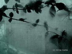 foto di Mirna Rivalta