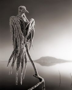 Deadly African Salt Lake Turns Animals Into Ghostly Statues