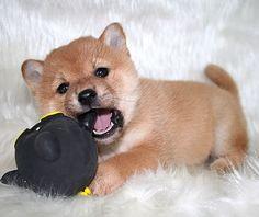 Cute, cute, cute!!!!! <3