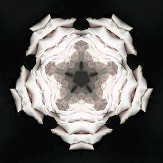 Multidimensional Rose