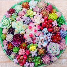 So. Much. Color. #succulent #succulents #succulove