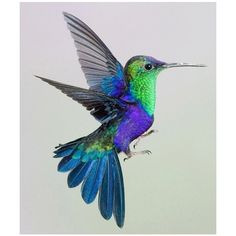 Image result for purple and green hummingbirds