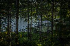 Skrøvlingen Lake, near Hokåsen, Norway