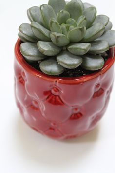 Succulent in a red hot pot. @ Eucca's Etsy shop