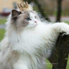 Você ouviu falar? Há uma nova bela adormecida na área! Conheça Aurora, a gata princesa mais bela e fofa.