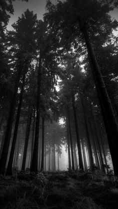 Image dark, forest, black, tree, black and white Forest Wallpaper, Wood Wallpaper, Htc Wallpaper, Mobile Wallpaper, Black And White Tree, Beautiful Nature Wallpaper, Dark Photography, Phone Backgrounds, Wallpaper Backgrounds