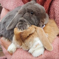 "Rabbit & Bunny on Instagram: ""😍😍😍 Follow us @rabbitdotbunny for more By 📷 @woodyandfloyd"""