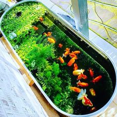 Have you heard of aquaponics? Aquaponics Combines the Growing of Fish and Plants You may grow plants in water and without soil and once one does this together with growing fish you are practicing aquaponics. Outdoor Fish Ponds, Indoor Pond, Indoor Water Garden, Backyard Water Feature, Patio Pond, Ponds Backyard, Backyard Landscaping, Fish Pond Gardens, Small Water Gardens