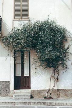 House Plant Maintenance Tips Doorway Sicily By Daniel Faro Interior Exterior, Exterior Design, Exterior Doors, Doorway, Outdoor Gardens, Architecture Design, Outdoor Living, Home And Garden, House Design