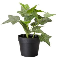 Ikea Artificial Potted Plant, English Ivy, 7.75 Inch * For more information, visit image link.