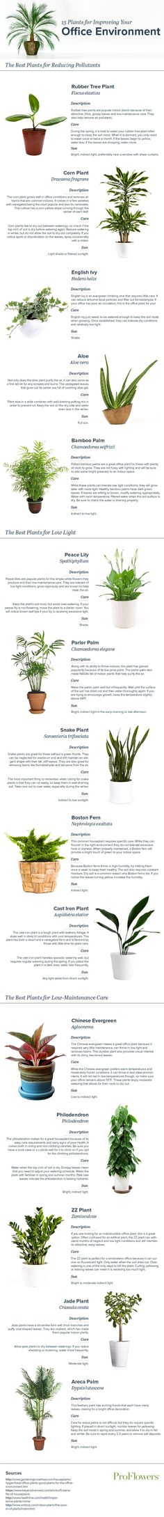 Does your office ever feel stuffy or artificial? Add some green to your workspace! Check out our list of the 15 best office plants.