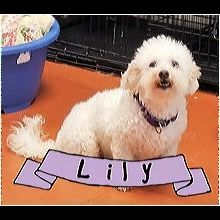 ― Bichon Frise Rescue ― ADOPTIONS Bichon Frise Rescue, Post Animal, Shelter, Adoption, Snoopy, Interior, Dogs, Fictional Characters, Animales