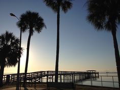 Discover Safety Harbor, home of the famous Safety Harbor Resort & Spa. Explore boutiques and restaurants on Main Street; or enjoy a picnic at Philippe Park. Clearwater Florida, Florida Usa, Safety Harbor Resort And Spa, Down South, Home And Away, Main Street, Palm Trees, Moonlight, Sunrise