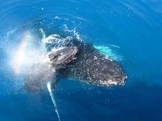 Whale watching fr. $110 per person. #Sydney - #Australia - #travel