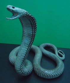 Image result for t. jones ceramic snake 1971