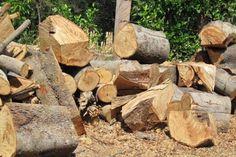 Deforestación en Darién, Panamá