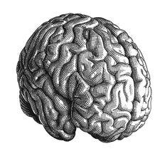 Brain Olivia Knapp