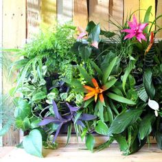Tropical living wall planter from pallets - Anyone can build this in less than 1 hour. Easy to maintain, and gorgeous!