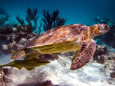 Untitled by davidschymura Underwater Photography Kayak Equipment, Green Turtle, Underwater World, Underwater Photography, Kayaking, Sailor, Waves, Sea, Animals