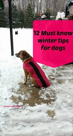 Caring for your dogs in cold weather. Keep your dog safe in the snow with these cold weather pet care tips. Winter can be a dangerous time for pets as the temperatures drops and snow starts falling. Discover top winter pet care tips. Winter Hacks, Winter Tips, Winter Hiking, Dog Care Tips, Pet Care, Pet Tips, Dog Clicker Training, Dog Training, Training Schedule