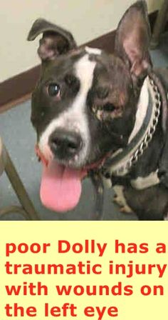 SAFE - 03/13/15 --- Brooklyn Center  DOLLY - A1029260 **Traumatic injury with wounds on the left eye**  FEMALE, BLACK / WHITE, AM PIT BULL TER MIX, 5 yrs OWNER SUR - EVALUATE, NO HOLD Reason PERS PROB  Intake condition UNSPECIFIE Intake Date 03/02/2015 https://www.facebook.com/Urgentdeathrowdogs/photos/pb.152876678058553.-2207520000.1425506560./971082056238007/?type=3&theater