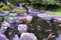 Met koi karpers in de Japanse vijver is het beeld compleet.