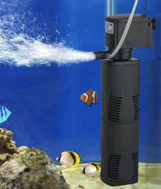 How to Clean Out a Fish Tank Filter?