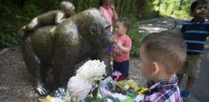 La vida del niño vale más que la del gorila Harambe...