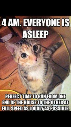 Funny cat quotes, funny cat pics, cute cat memes, cats funny sayings, Funny Animal Jokes, Funny Cat Memes, Cute Funny Animals, Cute Baby Animals, Funny Cute, Funny Shit, Funniest Animals, Funny Pics, Super Funny