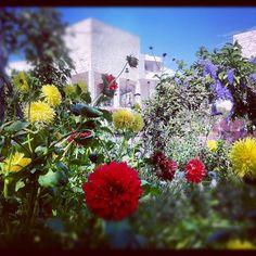 "arronsb: ""Getty Museum Flower Garden"" (Taken with instagram)"