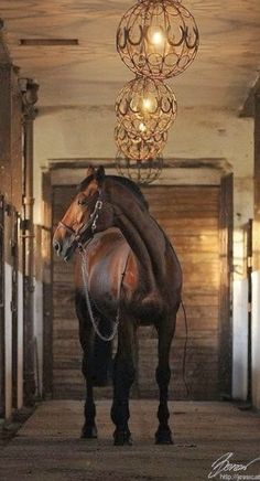 Dream Stables, Dream Barn, Horse Stables, Horse Farms, All The Pretty Horses, Beautiful Horses, Animals Beautiful, Hello Beautiful, Beautiful Lights