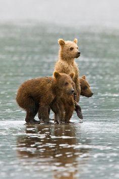 Omg. I love love love bears! ! :))
