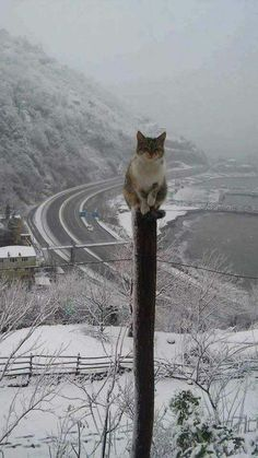 Fotó A long way up. Wow!!  ~~ My kitty got stuck up on top of a telephone pole when I was a kid and my mother had to climb up the pole to get her down SO I am hoping this little one didn't stay up there longer than she intended especially with how cold that weather looks to be ~~