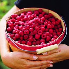 Snack on (or slurp) the world's finest raspberries - Must-Eat Foods of the West - Sunset